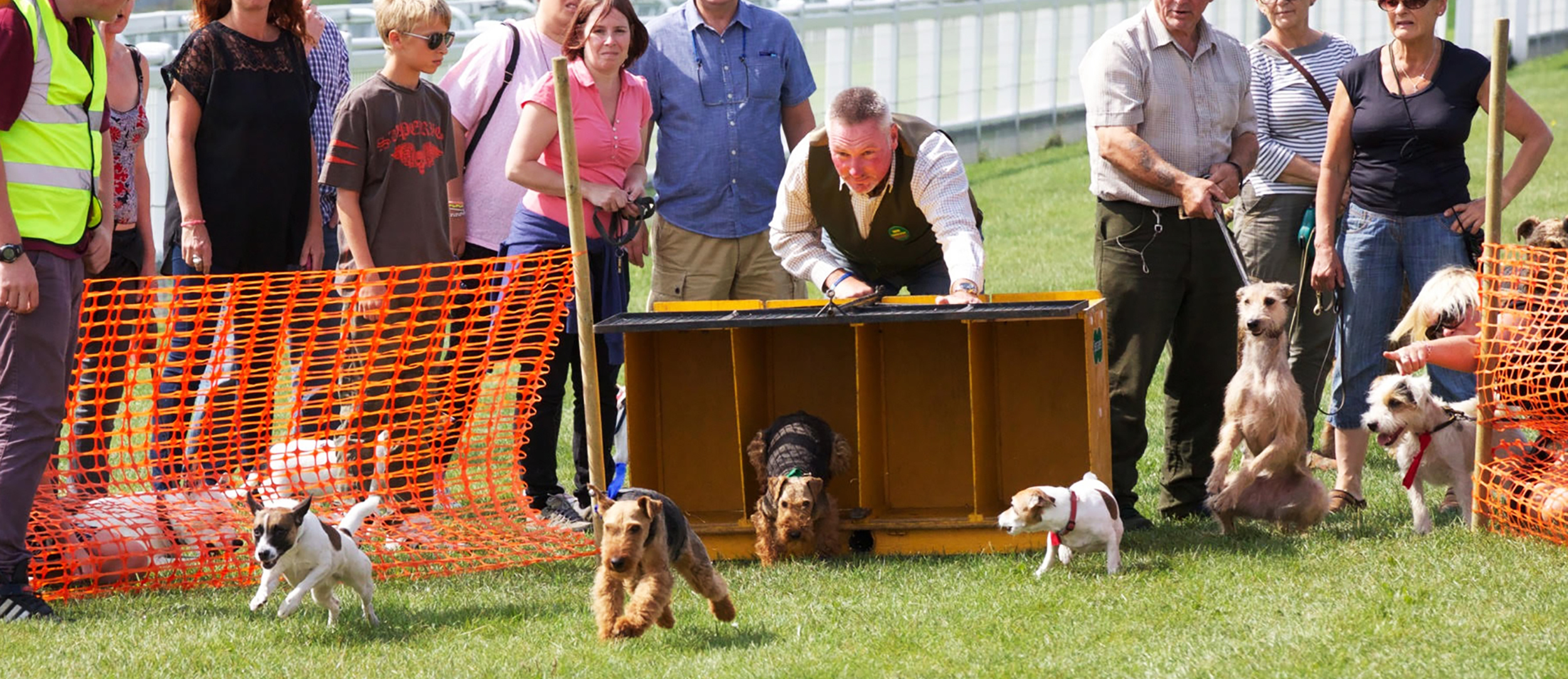 Dogs starting race